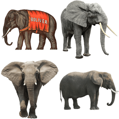 Elephants Transparent Png Images Stickpng Elephant png images background ,and download free photo png stock pictures and transparent background with high quality. stickpng