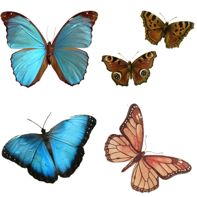 Insects transparent PNG images - StickPNG