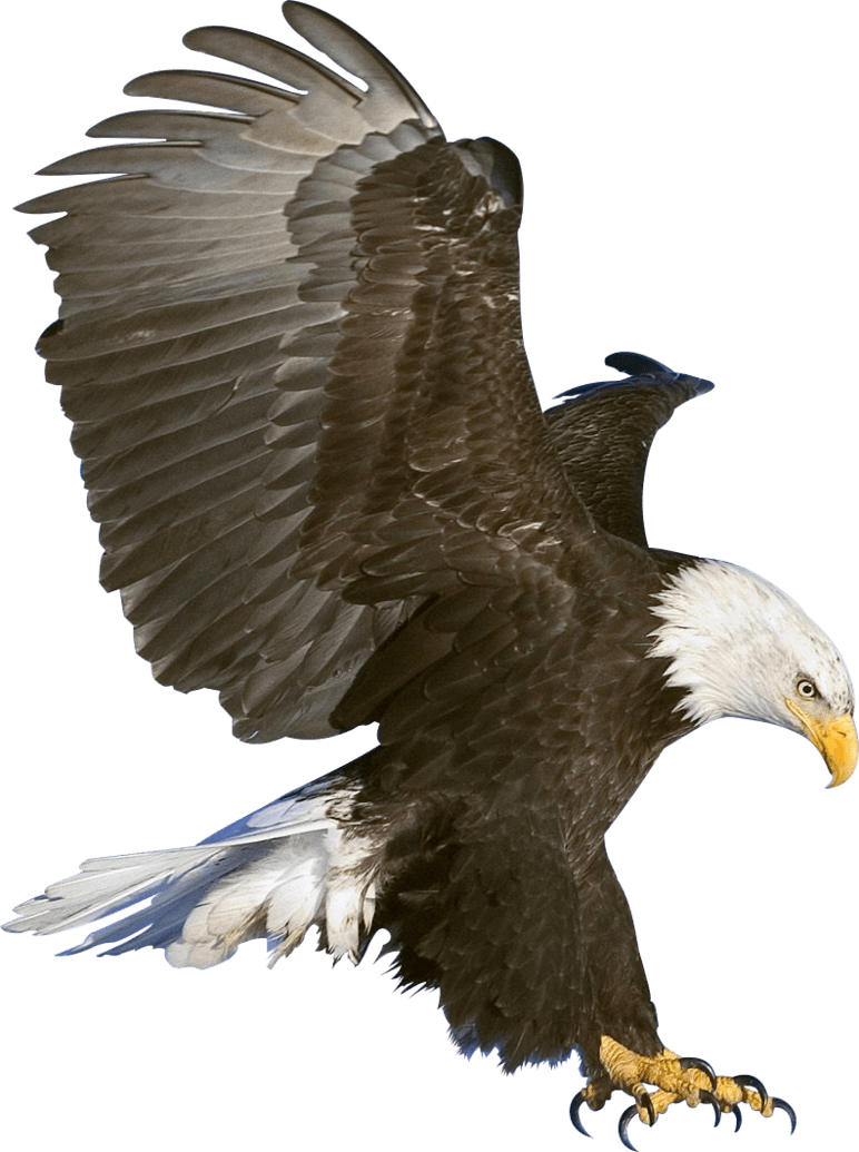 Eagle Claws transparent PNG - StickPNG