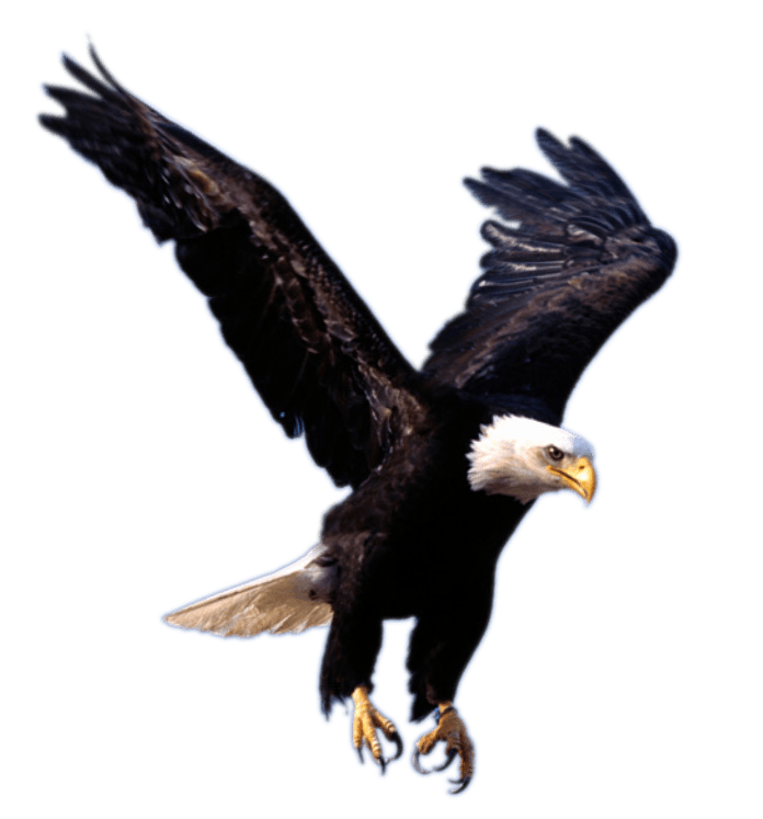 The Eagle Has Landed Quote: Eagle Landing Transparent PNG
