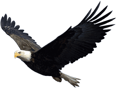 Flying Eagle transparent PNG - StickPNG