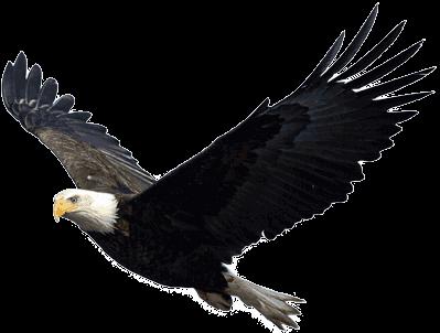 Flying eagle transparent png stickpng flying eagle altavistaventures Gallery