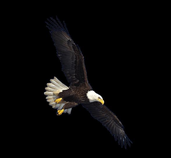 Us eagle flying transparent png stickpng animals birds eagles altavistaventures Images