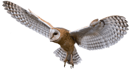 Owl Flying transparent PNG - StickPNG