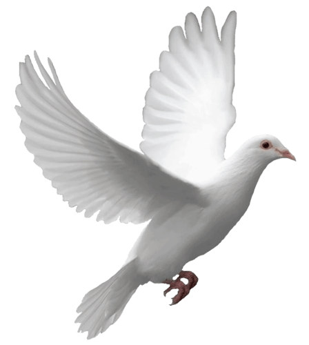 Flying Dove transparent PNG - StickPNG
