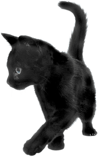 Black Cat Sideview transparent PNG - StickPNG