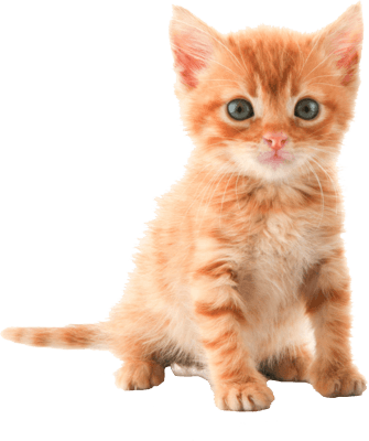 Cute Kitten transparent PNG - StickPNG