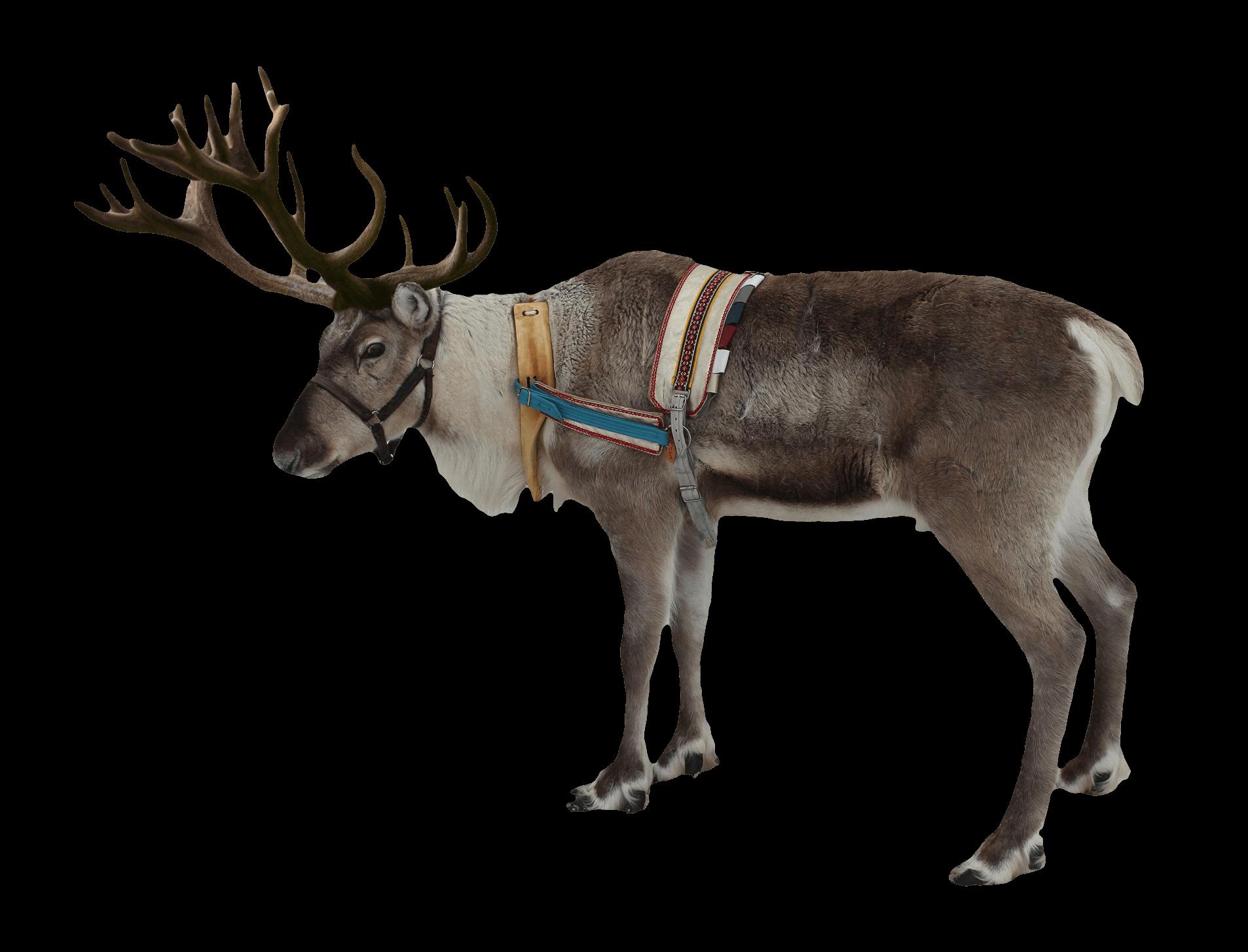 Christmas Reindeer Png.Reindeer Christmas Transparent Png Stickpng