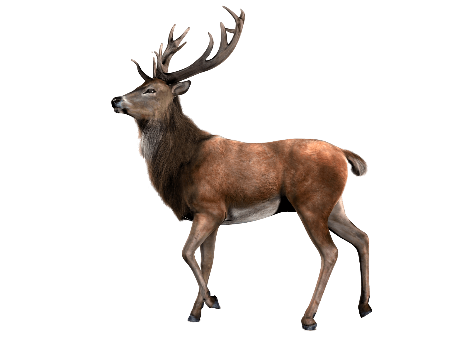 Single Deer transparent PNG - StickPNG
