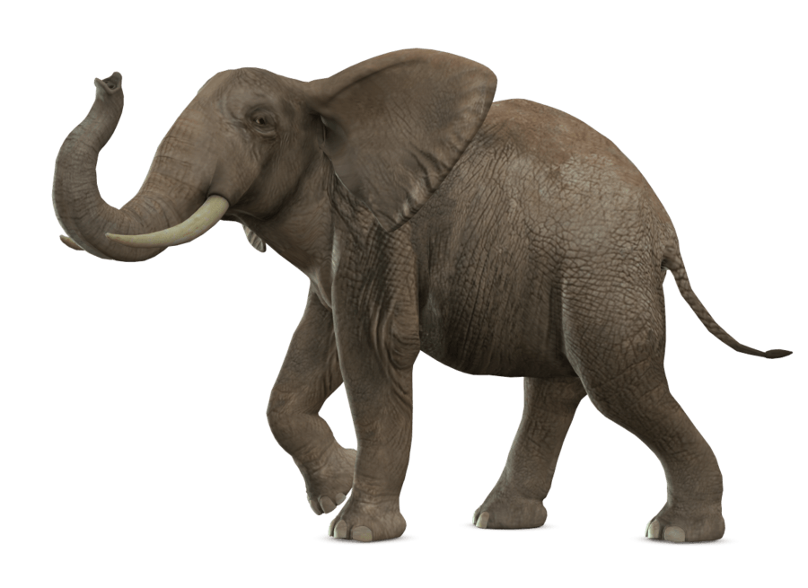 Elephant Walking Transparent Png Stickpng It can be downloaded in best resolution and used for design and web design. stickpng