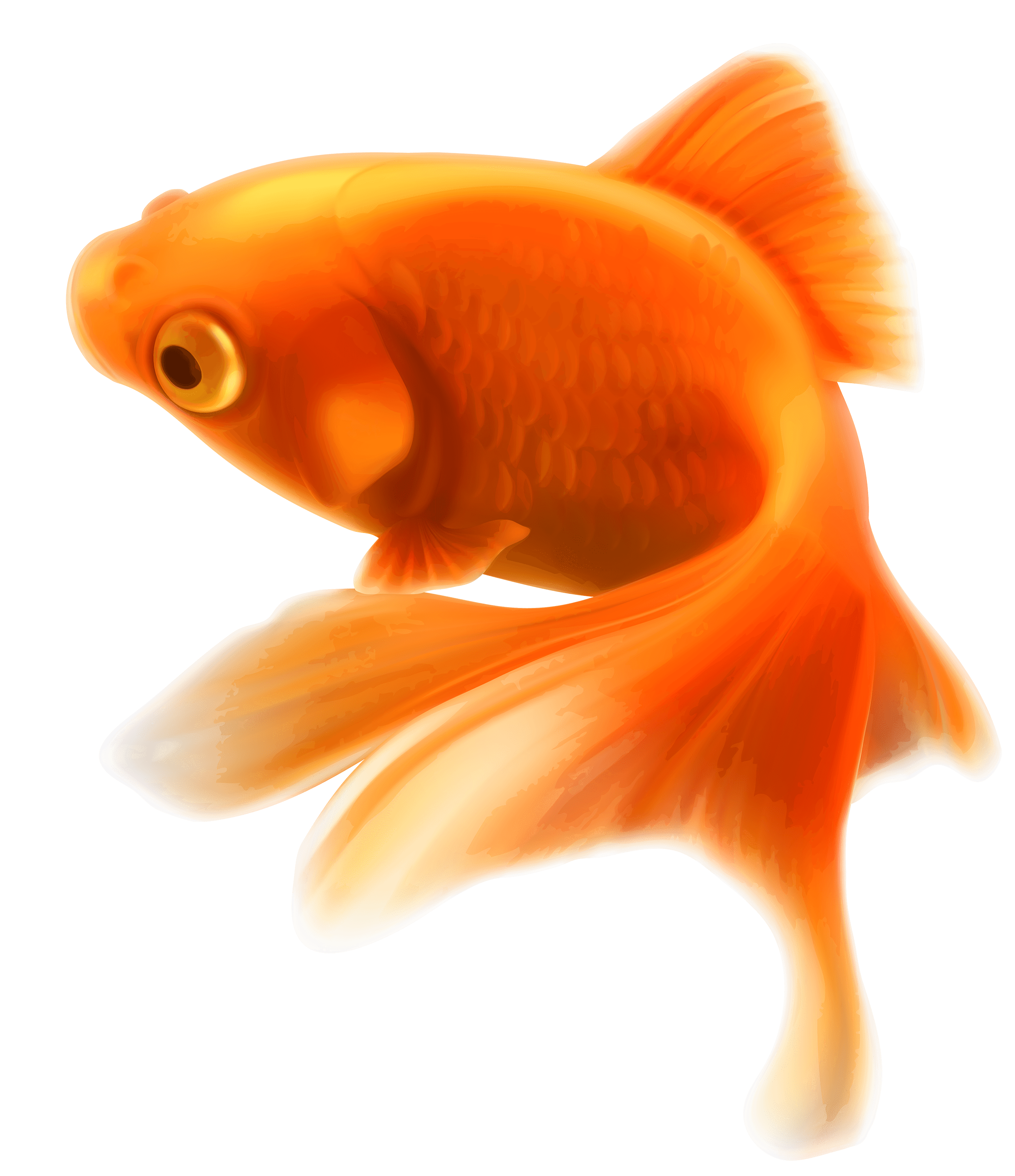 Gold fish transparent png stickpng for Small fish pictures