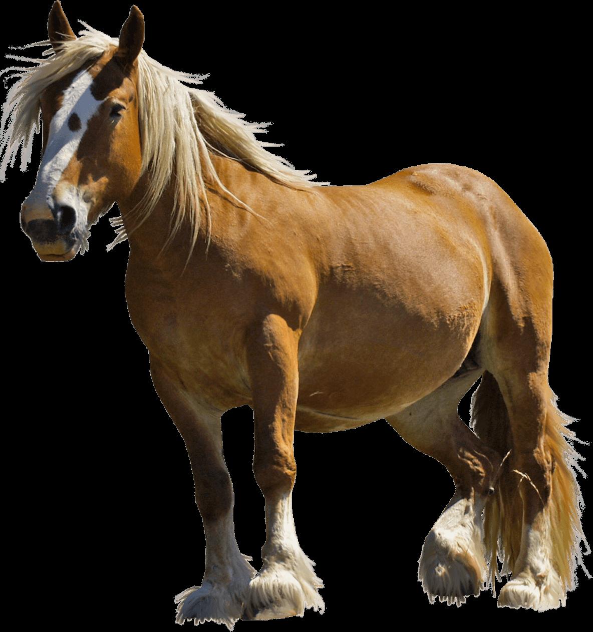 Download Farm Horse transparent PNG