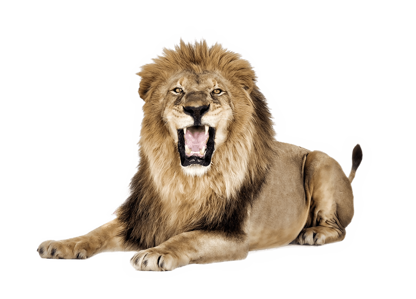 Lion Roar transparent PNG StickPNG