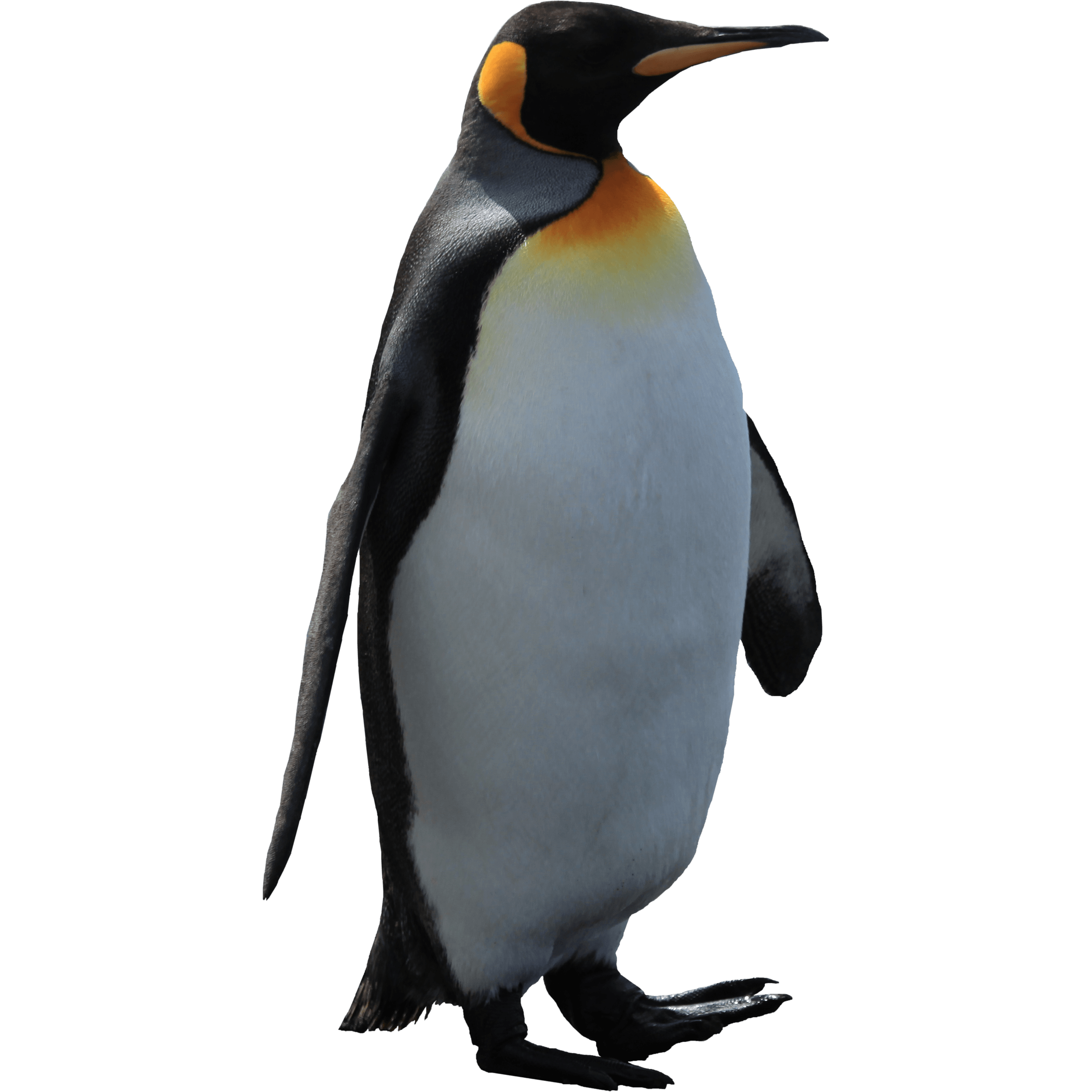 penguin sex personals Penguin's best 100% free gay dating site want to meet single gay men in penguin, tasmania mingle2's gay penguin personals are the free and easy way to find other penguin gay singles looking for dates, boyfriends, sex, or friends.