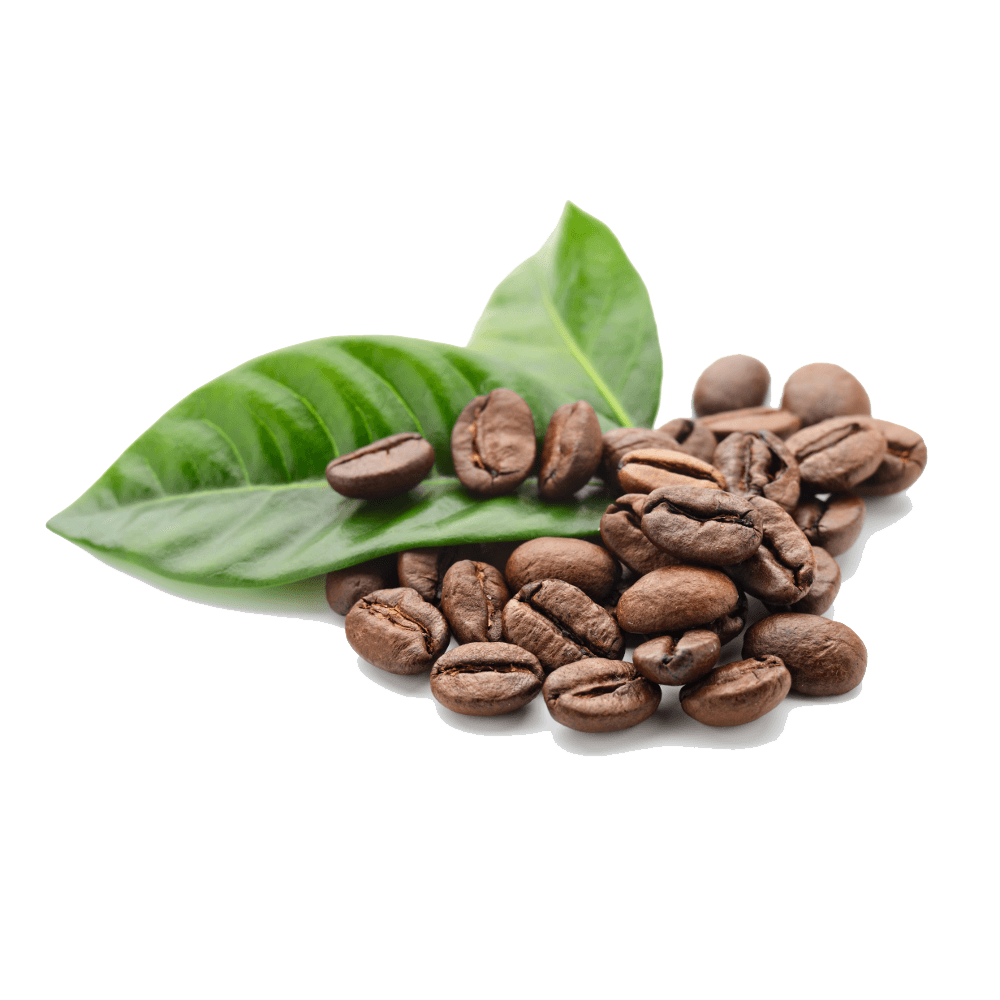 Coffee Beans Leaves transparent PNG - StickPNG
