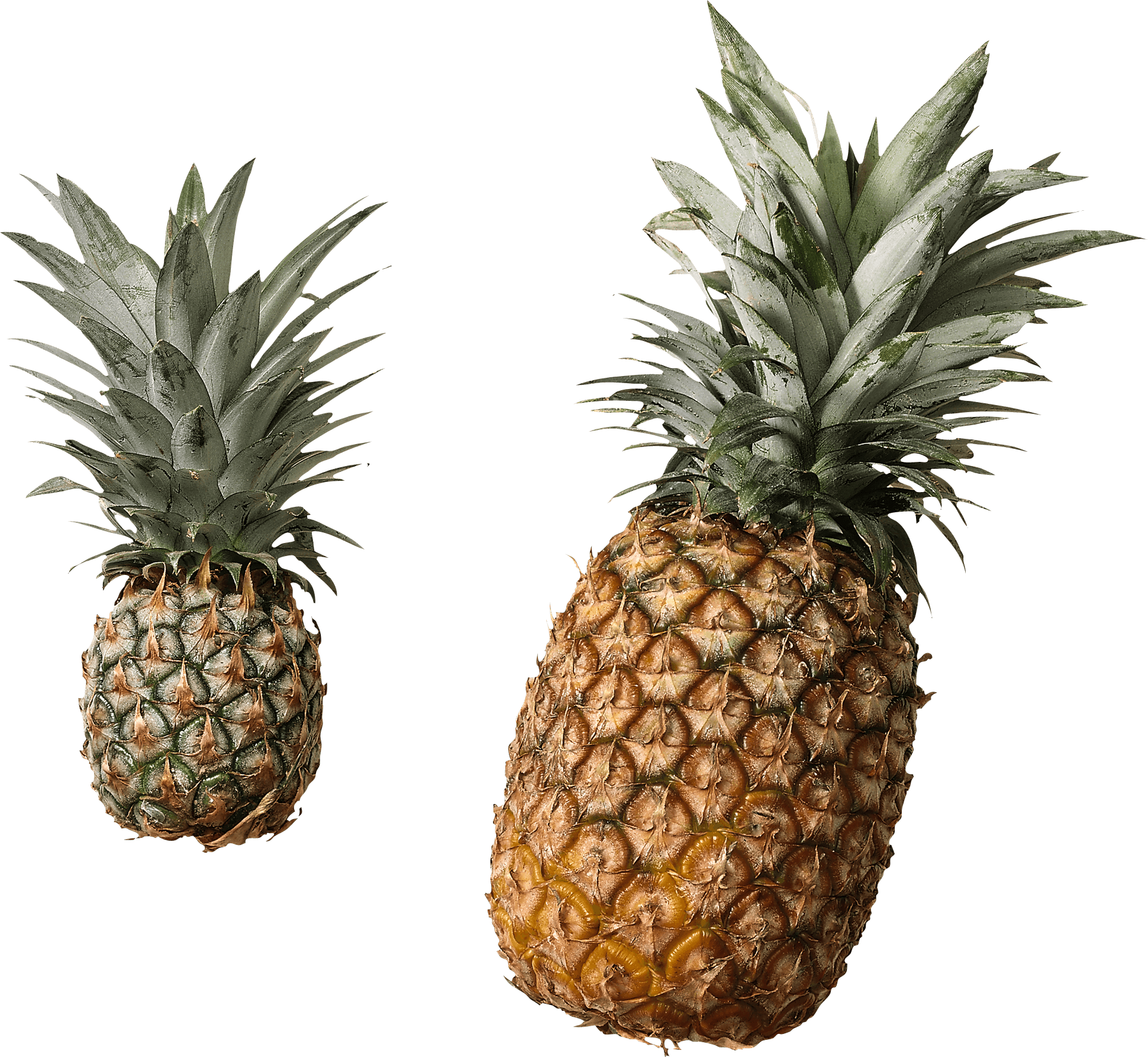 Pineapple Duo transparent PNG - StickPNG