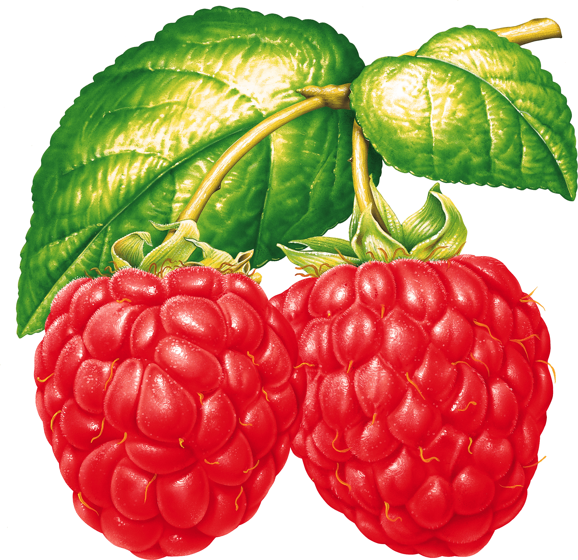 Полезные стишки про овощи фрукты и витамины