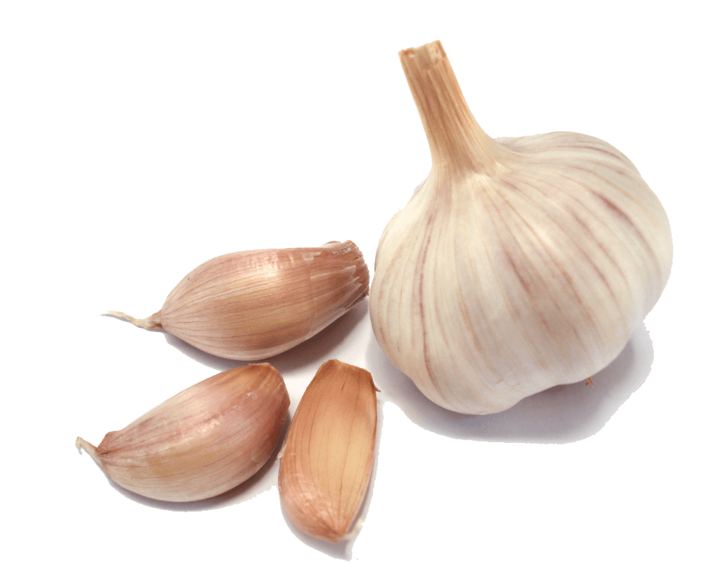 Garlic Group transparent PNG - StickPNG