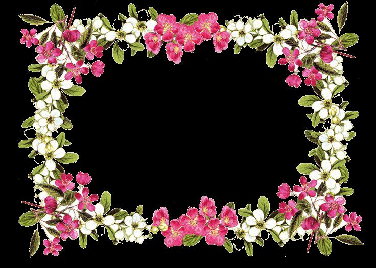 Flowers Frame Rose transparent PNG - StickPNG