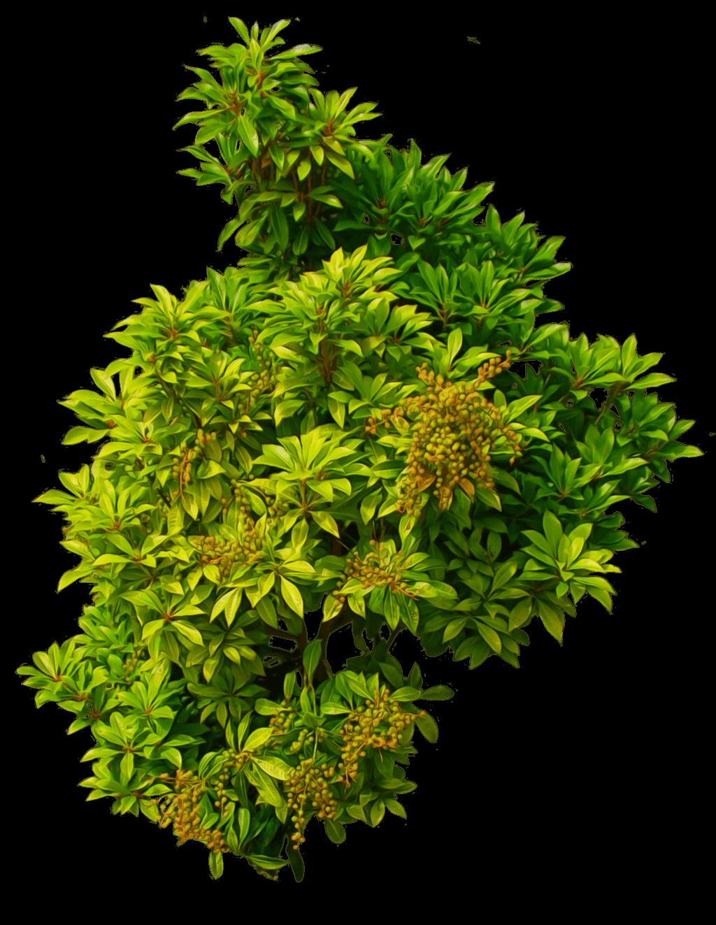 Bush Light Green transparent PNG - StickPNG for Plant Transparent Png  131fsj