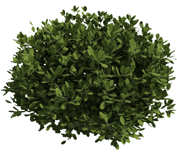 Green Bush transparent PNG - StickPNG
