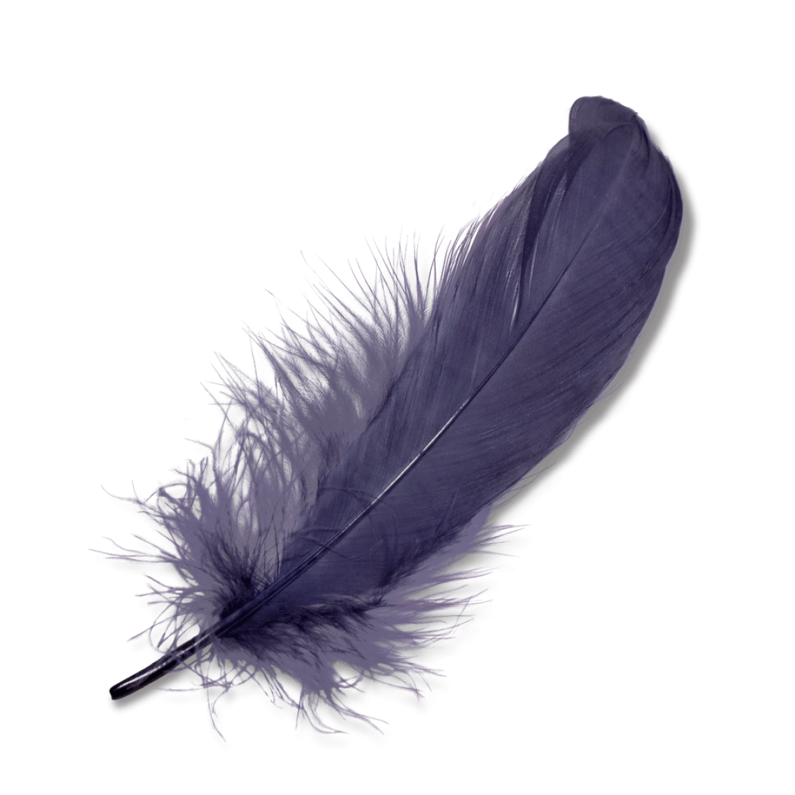 Purple Feather transparent PNG - StickPNG