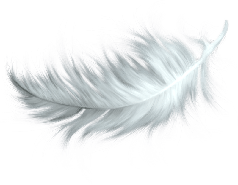 White Feather transparent PNG - StickPNG