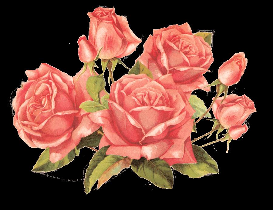 Bouquet Of Vintage Roses transparent PNG - StickPNG