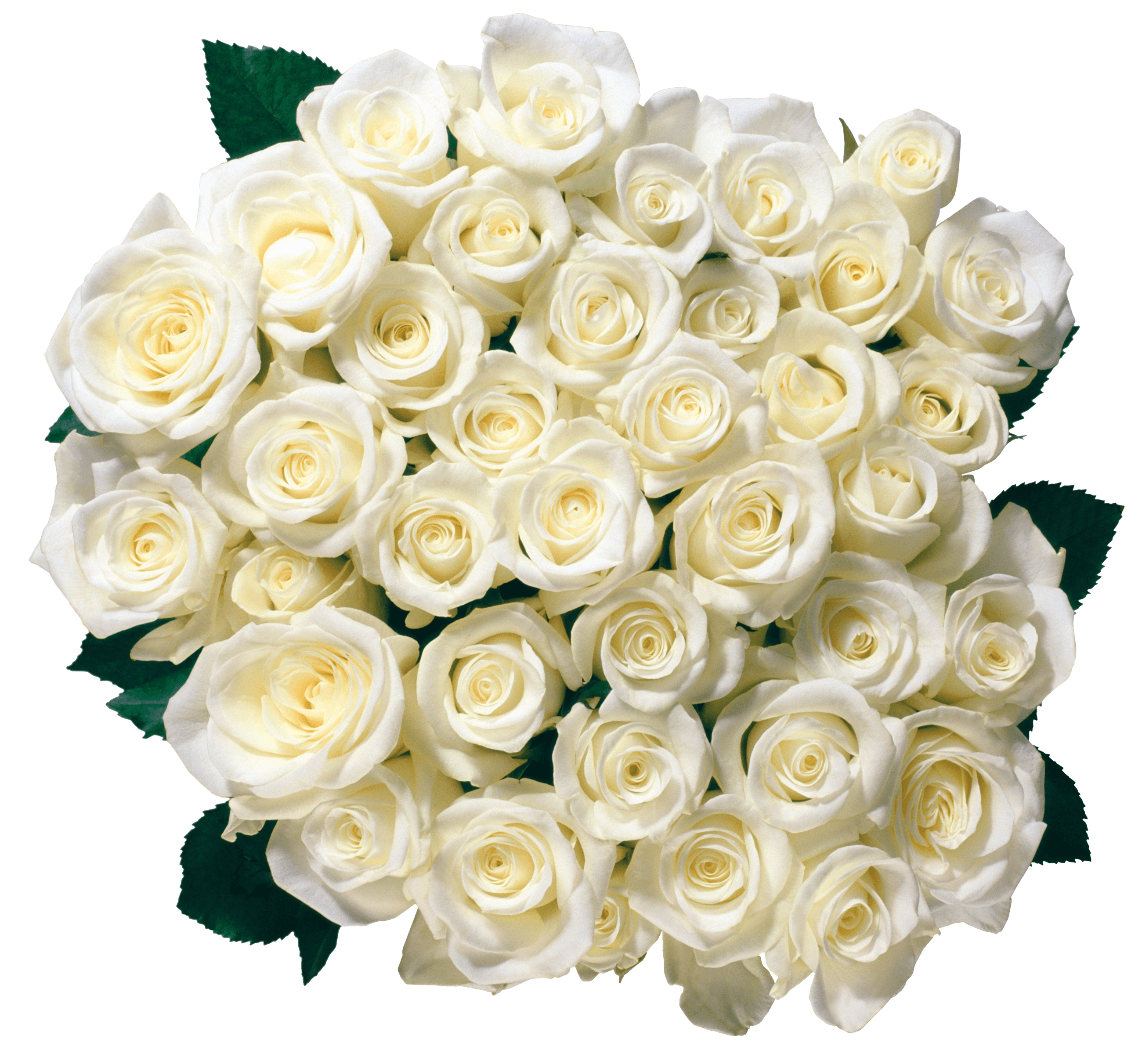 Bouquet Of White Roses Transparent Png Stickpng