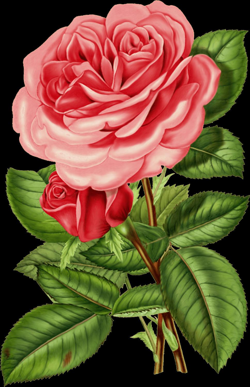 Large Pink Victorian Vintage Rose Transparent Png Stickpng