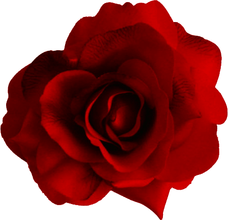 Large Red Rose Transparent Png Stickpng