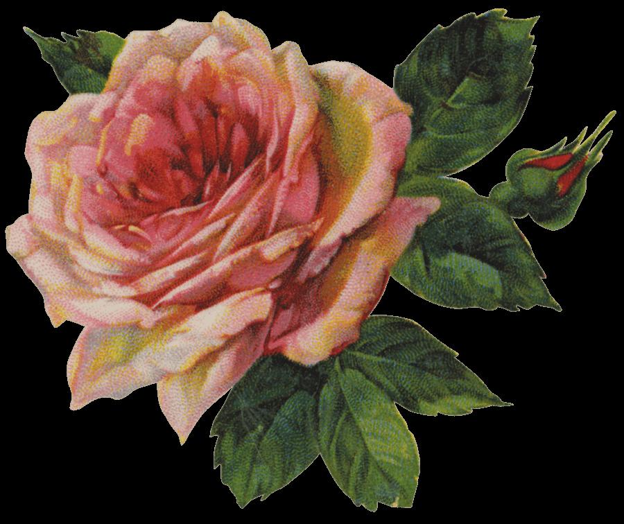 Vintage Victorian Rose...