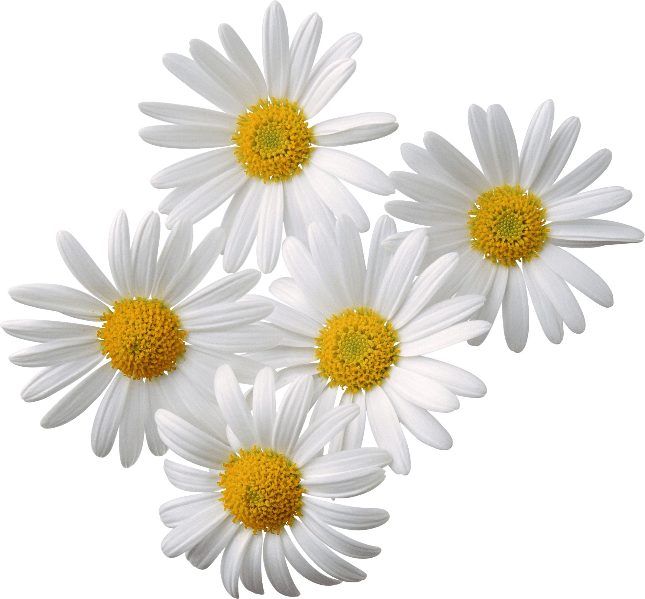 Flowers Bouquet Round transparent PNG - StickPNG