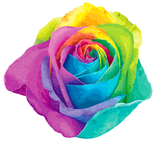 Rainbow flower transparent png stickpng for How much are rainbow roses