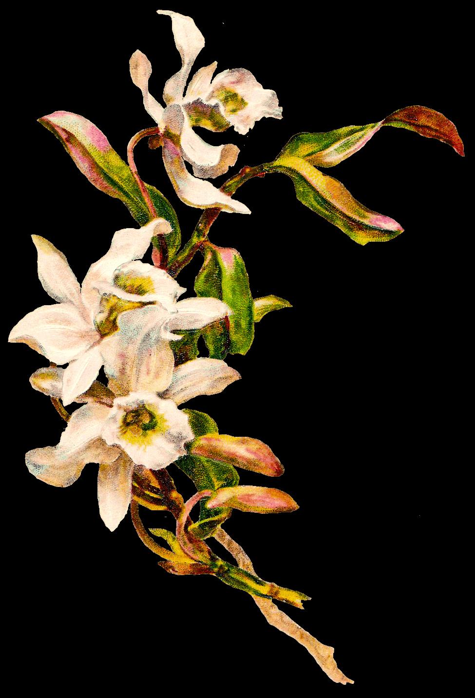 Victorian vintage flowers transparent png stickpng - Idee deco vase transparent ...