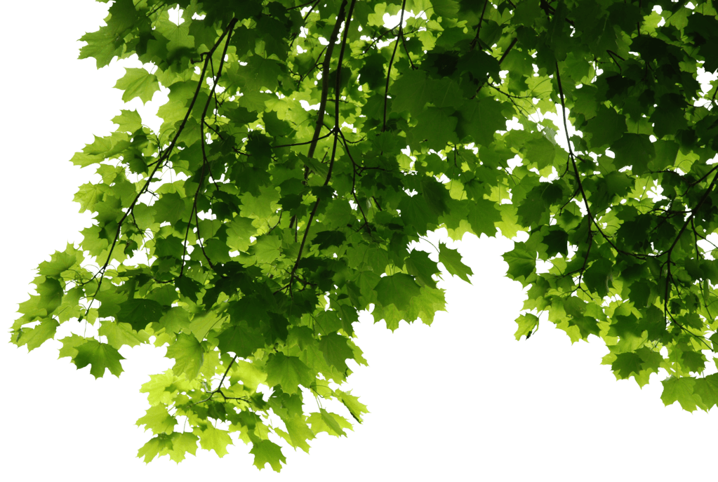 Leaves Corner Transparent Png Stickpng You can download leaf png posters and flyers templates,leaf png backgrounds,banners,illustrations and graphics image in psd and vectors for free. stickpng