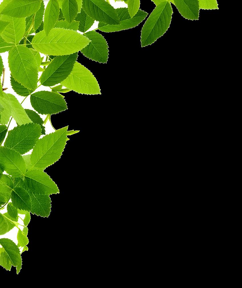 Leaves Left Corner transparent PNG - StickPNG