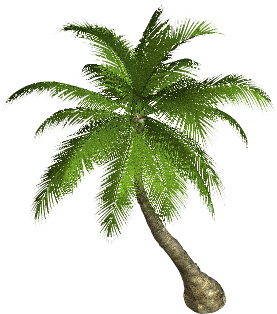 Palm Tree transparent PNG - StickPNG