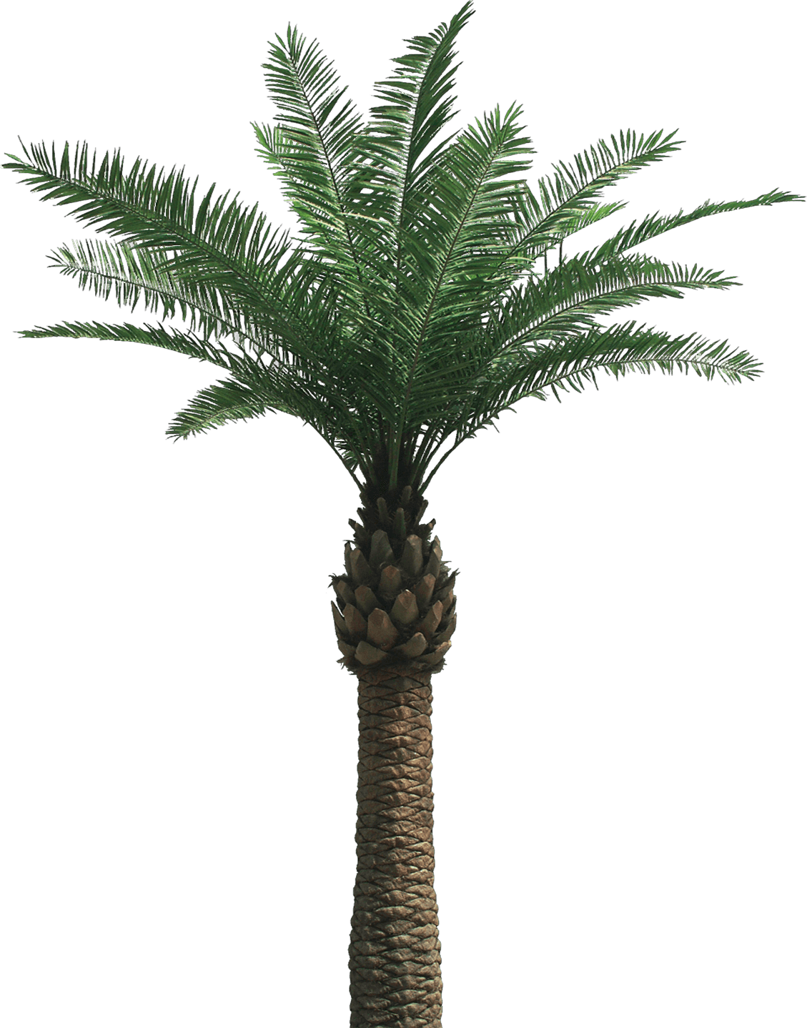 palm tree transparent png stickpng