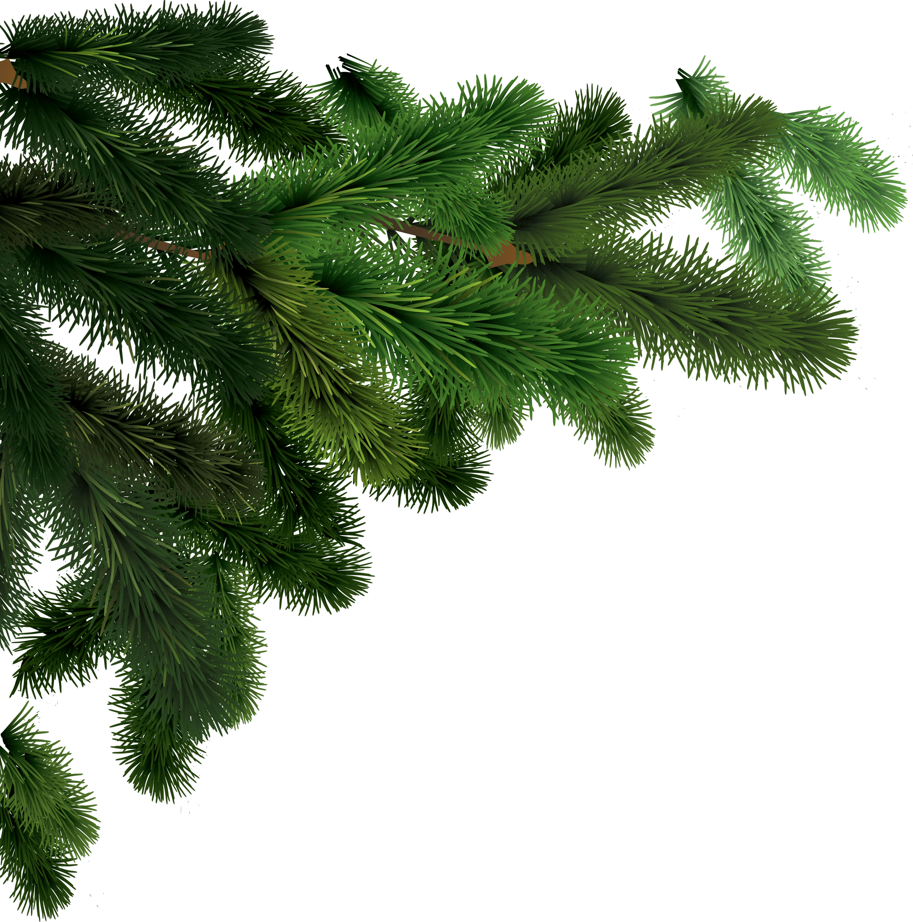 Side Branches Fir Tree Transpa Png
