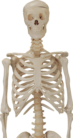 Body Skeleton transparent PNG - StickPNG