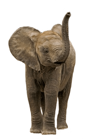 Download Png Elephant Png Gif Base Browse millions of hd transparent png images for your projects. download png elephant png gif base