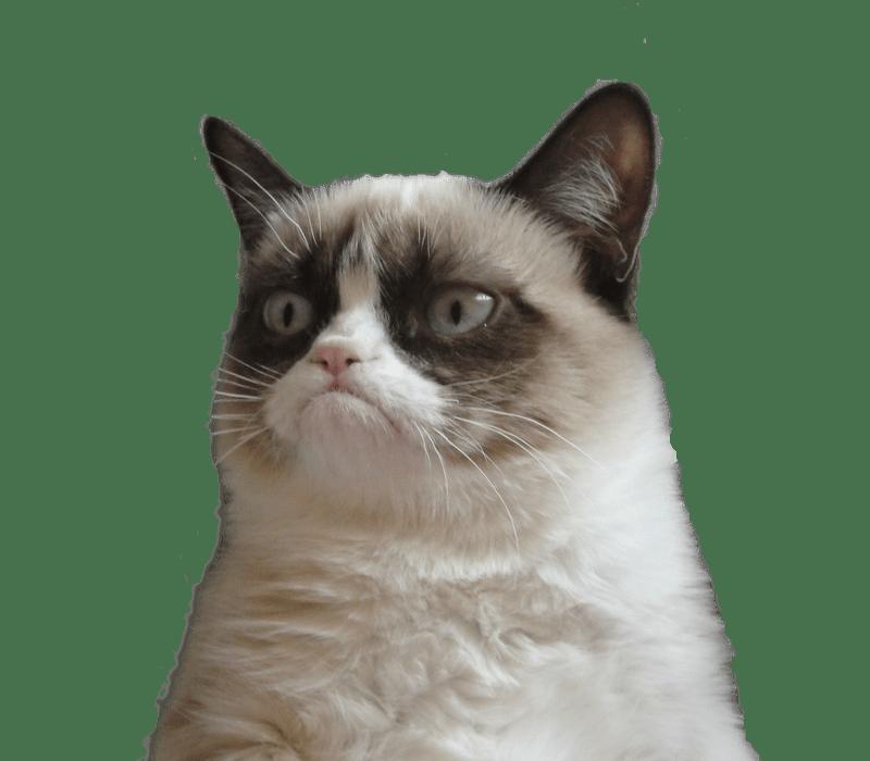 Cat Emoji Meme
