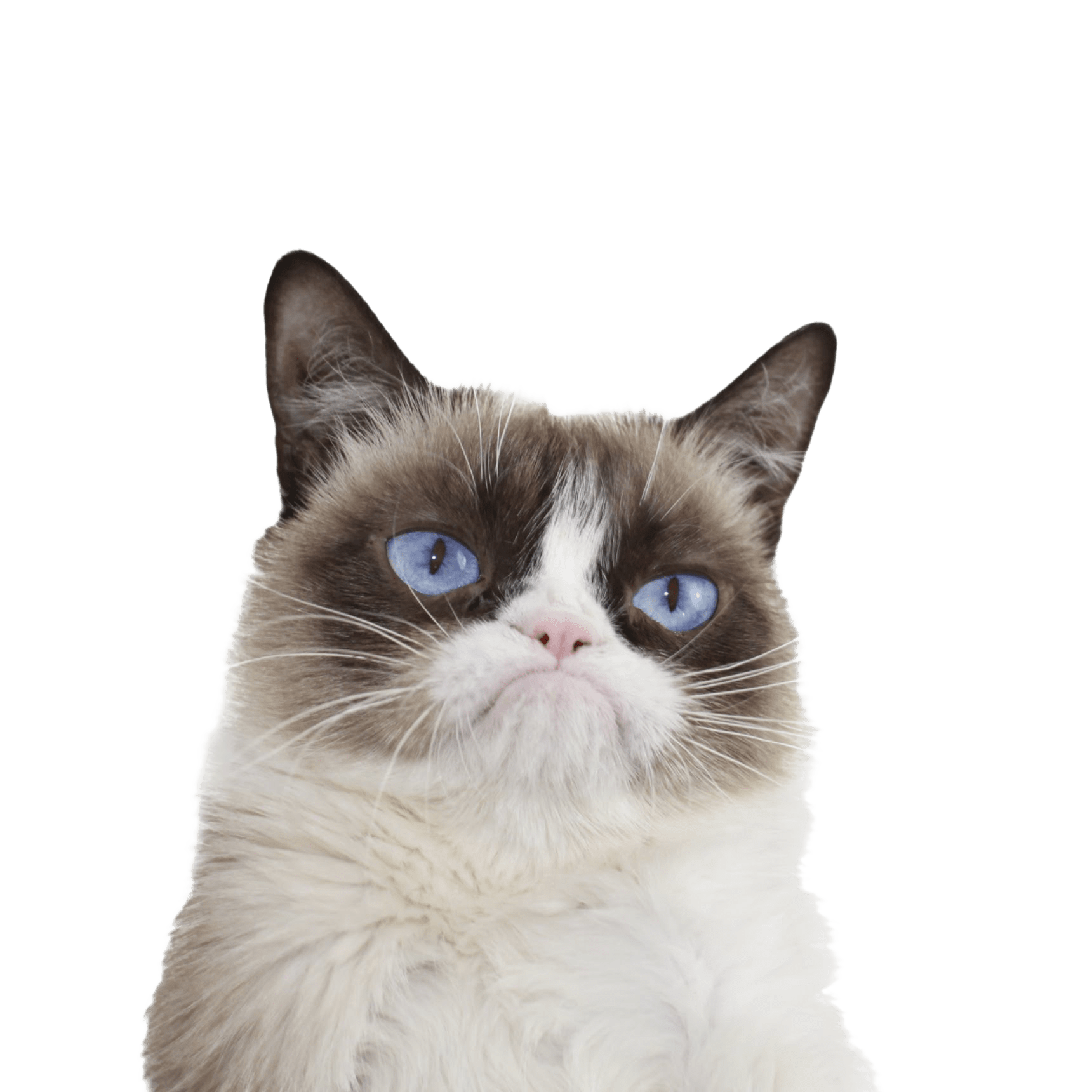 grumpy cat blue eyes transparent png stickpng