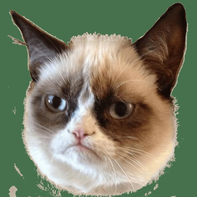 Grumpy Cat Head transparent PNG - StickPNG