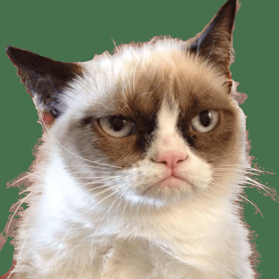 phenobarbitol for cats