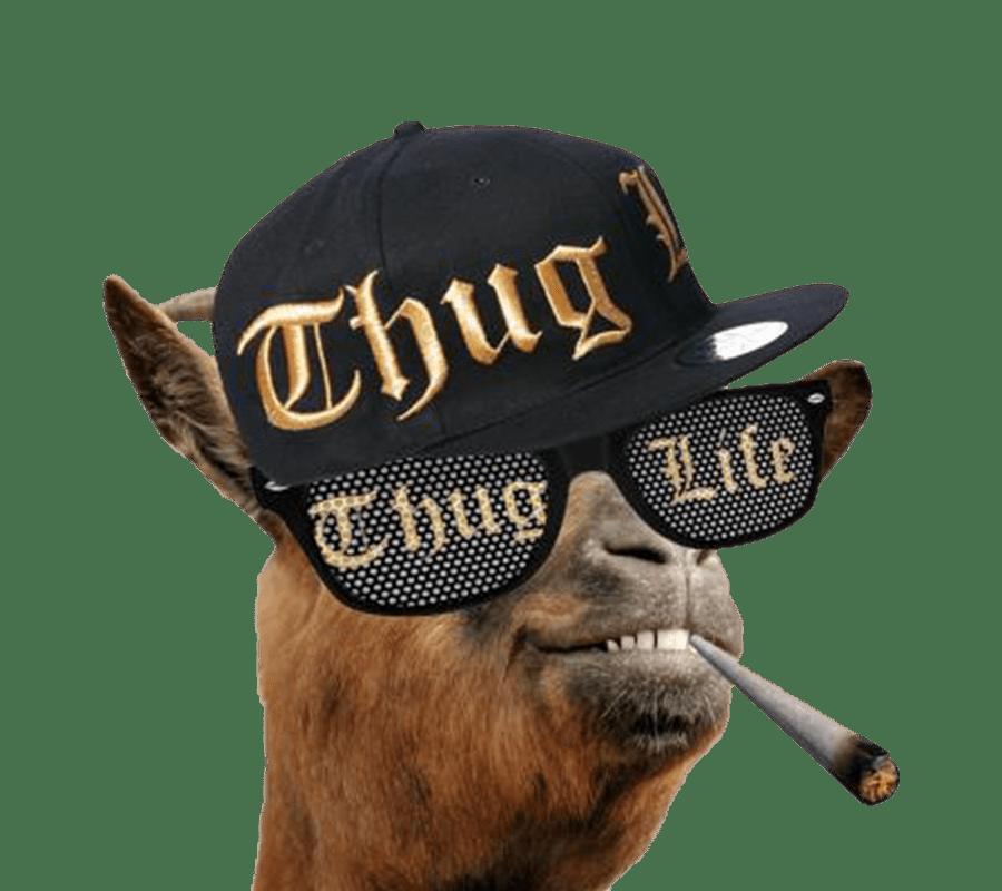 Thug Life Llama Transparent Png Stickpng