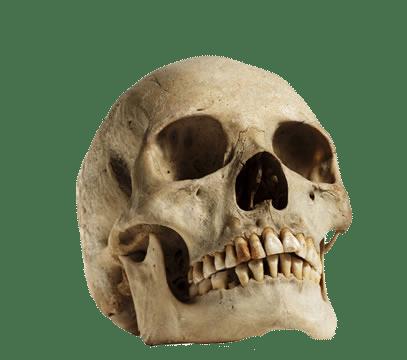 Cráneo humano Posición hacia arriba PNG transparente - StickPNG