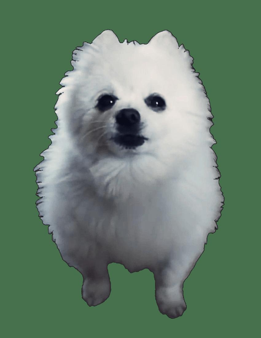 doge meme white background