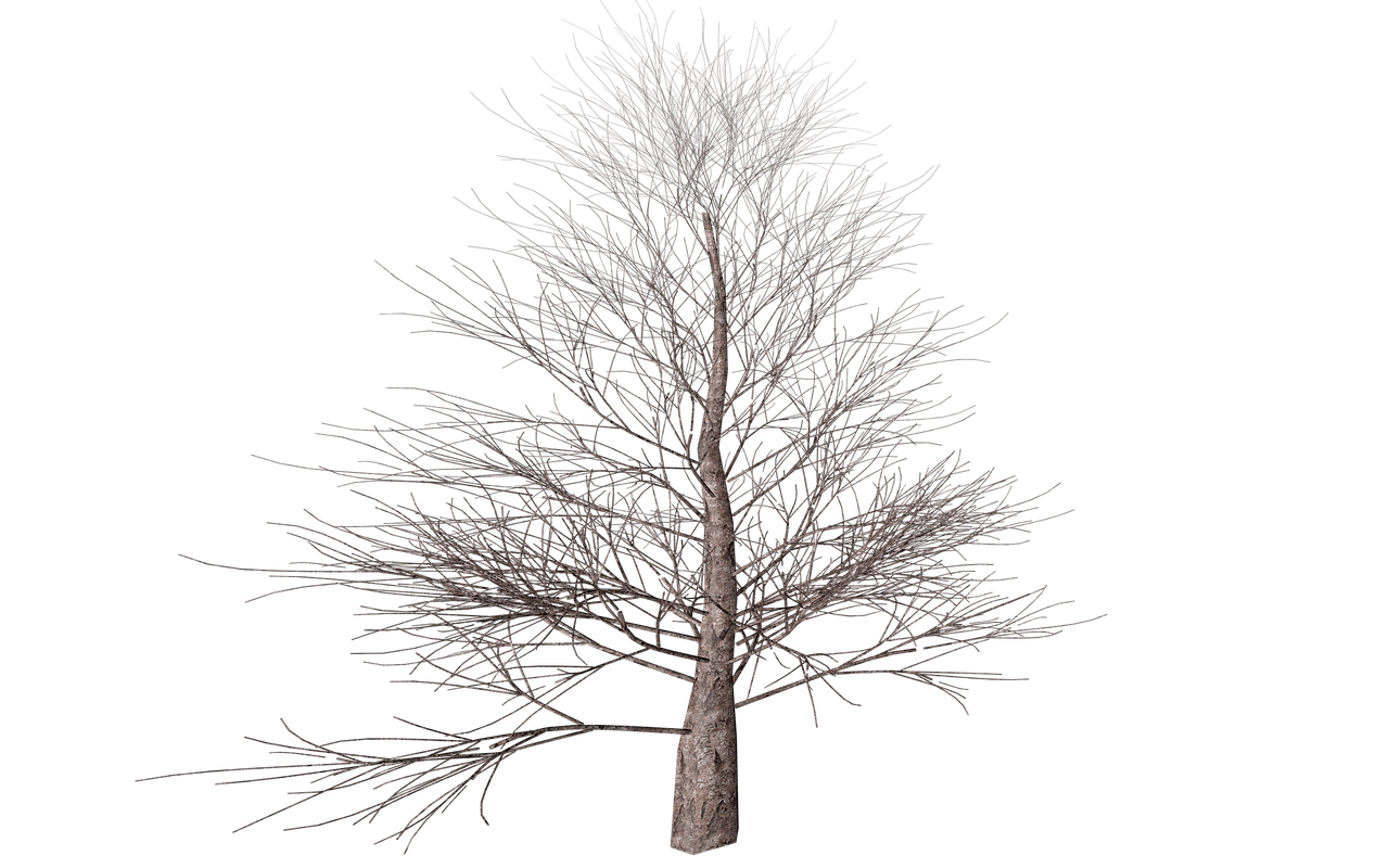 winter tree transparent png stickpng